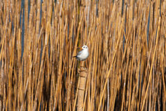 Seagull να σκαρφαλώσει Στοκ εικόνες με δικαίωμα ελεύθερης χρήσης