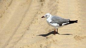 Seagull ν η παραλία Στοκ εικόνα με δικαίωμα ελεύθερης χρήσης