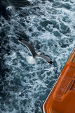 Seagull πέρα από το νερό Στοκ Εικόνα