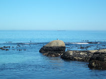 seagull πετρελαίου βυτιοφόρο Στοκ Φωτογραφία