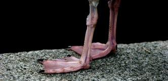 seagull ποδιών Στοκ Εικόνες