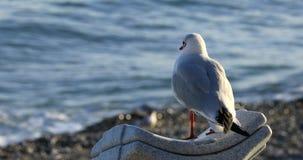 Seagull πουλί που κοιτάζει έξω πέρα από μια αστράφτοντας θάλασσα φιλμ μικρού μήκους