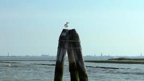Seagull πουλί που στηρίζεται σε έναν ξύλινο πόλο πρόσδεσης και που φαίνεται η θάλασσα στη Βενετία απόθεμα βίντεο