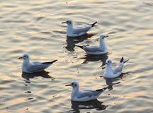 Seagull πουλιά Στοκ φωτογραφία με δικαίωμα ελεύθερης χρήσης