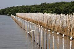 seagull πουλιών Στοκ εικόνες με δικαίωμα ελεύθερης χρήσης