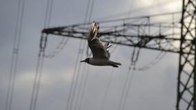 Seagull πουλί κατά την πτήση Στοκ φωτογραφίες με δικαίωμα ελεύθερης χρήσης