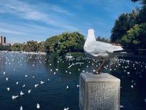 Seagull που ξανακοιτάζει, η seagull σκέψη στοκ εικόνες