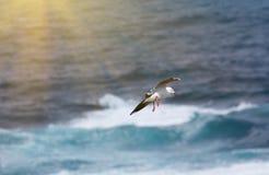 Seagull που πετά επάνω από τον ωκεανό Στοκ εικόνα με δικαίωμα ελεύθερης χρήσης