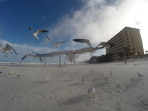 Seagull που πετά κοντά στη κάμερα Στοκ Εικόνες