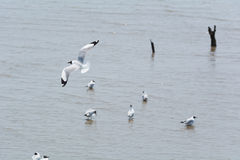 Seagull που πετά πέρα από άλλους Στοκ φωτογραφίες με δικαίωμα ελεύθερης χρήσης