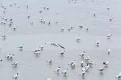 Seagull που πετά πέρα από άλλους στοκ εικόνες