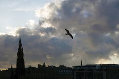 Seagull που πετά πέρα από τον ορίζοντα του Εδιμβούργου στο σούρουπο στοκ φωτογραφίες με δικαίωμα ελεύθερης χρήσης