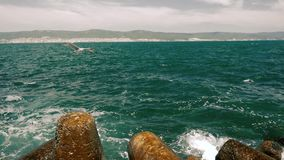 Seagull που πετά σε σε αργή κίνηση επάνω από τους βράχους θάλασσας φιλμ μικρού μήκους