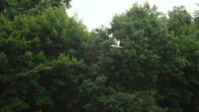Seagull που πετά σε σε αργή κίνηση 180 fps σε αργή κίνηση φιλμ μικρού μήκους
