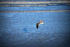 Seagull που πετά στα ύψη πέρα από τον μπλε ωκεανό Στοκ Εικόνα