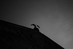 Seagull που σκαρφαλώνει στην άκρη της οικοδόμησης Στοκ Εικόνες