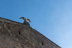 Seagull που σκαρφαλώνει στην άκρη της οικοδόμησης Στοκ εικόνα με δικαίωμα ελεύθερης χρήσης