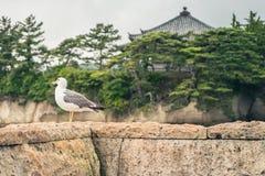 Seagull που στέκεται σε έναν τοίχο πετρών με έναν ναό και τα δέντρα στο υπόβαθρο στοκ φωτογραφία