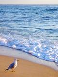 seagull προγευμάτων Στοκ φωτογραφίες με δικαίωμα ελεύθερης χρήσης