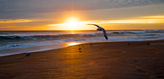 Seagull προσγείωσης στοκ φωτογραφία με δικαίωμα ελεύθερης χρήσης