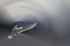 seagull πτήσης διανυσματική απεικόνιση