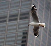 seagull πόλεων Στοκ Εικόνες