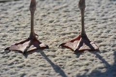 Seagull πόδια στο κατασκευασμένο σκυρόδεμα Στοκ εικόνες με δικαίωμα ελεύθερης χρήσης