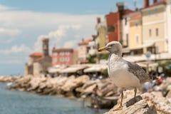 Seagull σε έναν βράχο Στοκ εικόνα με δικαίωμα ελεύθερης χρήσης
