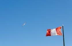 Seagull σε έναν μπλε ουρανό Στοκ Φωτογραφίες