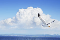 Seagull σε έναν μπλε ουρανό Στοκ φωτογραφία με δικαίωμα ελεύθερης χρήσης