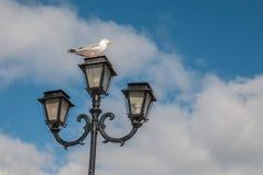 Seagull σε ένα φανάρι Στοκ Φωτογραφίες