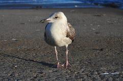 Seagull σε μια αποβάθρα στοκ φωτογραφίες με δικαίωμα ελεύθερης χρήσης