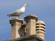 Seagull σε μια καπνοδόχο με τις νεολαίες της στοκ εικόνα