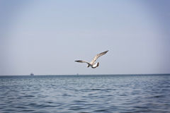 Seagull σε μια παραλία Στοκ εικόνες με δικαίωμα ελεύθερης χρήσης