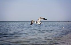 Seagull σε μια παραλία Στοκ φωτογραφία με δικαίωμα ελεύθερης χρήσης