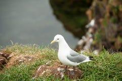 Seagull σε μια χαλαρώνοντας στιγμή Στοκ Φωτογραφίες