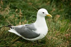 Seagull σε μια χαλαρώνοντας στιγμή Στοκ εικόνες με δικαίωμα ελεύθερης χρήσης