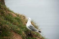 Seagull σε μια χαλαρώνοντας στιγμή Στοκ φωτογραφία με δικαίωμα ελεύθερης χρήσης