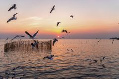 Seagull σε Bangpu, samut-Prakarn, Ταϊλάνδη στοκ φωτογραφία με δικαίωμα ελεύθερης χρήσης