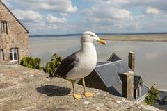 Seagull σε LE Mont Saint-Michel, το μεσαιωνικά ενισχυμένα αβαείο και το χωριό σε ένα παλιρροιακό νησί στη Νορμανδία, στοκ φωτογραφίες