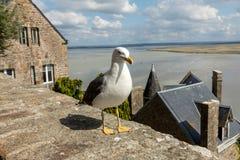 Seagull σε LE Mont Saint-Michel, το μεσαιωνικά ενισχυμένα αβαείο και το χωριό σε ένα παλιρροιακό νησί στη Νορμανδία, Γαλλία στοκ φωτογραφία