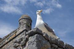 Seagull σε Portovenere Στοκ φωτογραφία με δικαίωμα ελεύθερης χρήσης