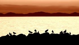 seagull σκιαγραφία Στοκ φωτογραφίες με δικαίωμα ελεύθερης χρήσης