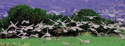 Seagull σμήνος στο νησί Ελλάδα Kos στοκ εικόνες με δικαίωμα ελεύθερης χρήσης