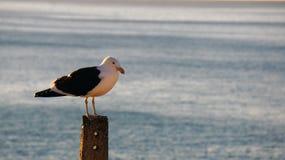 Seagull στάση ιονική μια θέση στοκ φωτογραφία με δικαίωμα ελεύθερης χρήσης