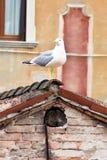 Seagull στάση Στοκ Εικόνες