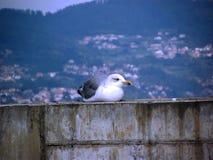 Seagull στήριξη Στοκ Εικόνες