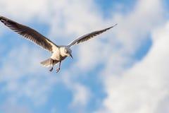Seagull στα σύννεφα Στοκ φωτογραφία με δικαίωμα ελεύθερης χρήσης