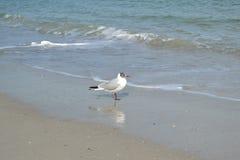 Seagull στην ακτή Μαύρης Θάλασσας στοκ εικόνες