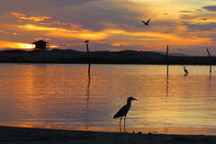 Seagull στην ανατολή ακροβατικών επιδείξεων στην παραλία Στοκ εικόνες με δικαίωμα ελεύθερης χρήσης